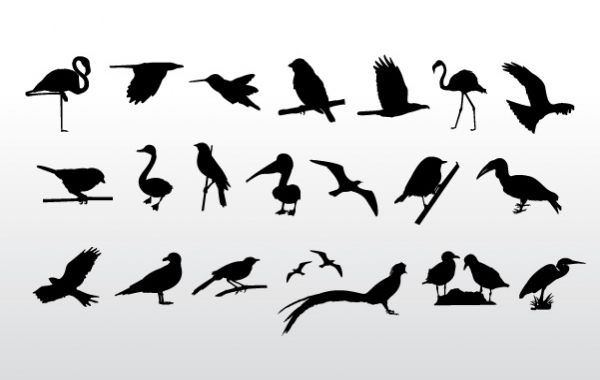600x380 Birds Collection Vector Download Hd Icon