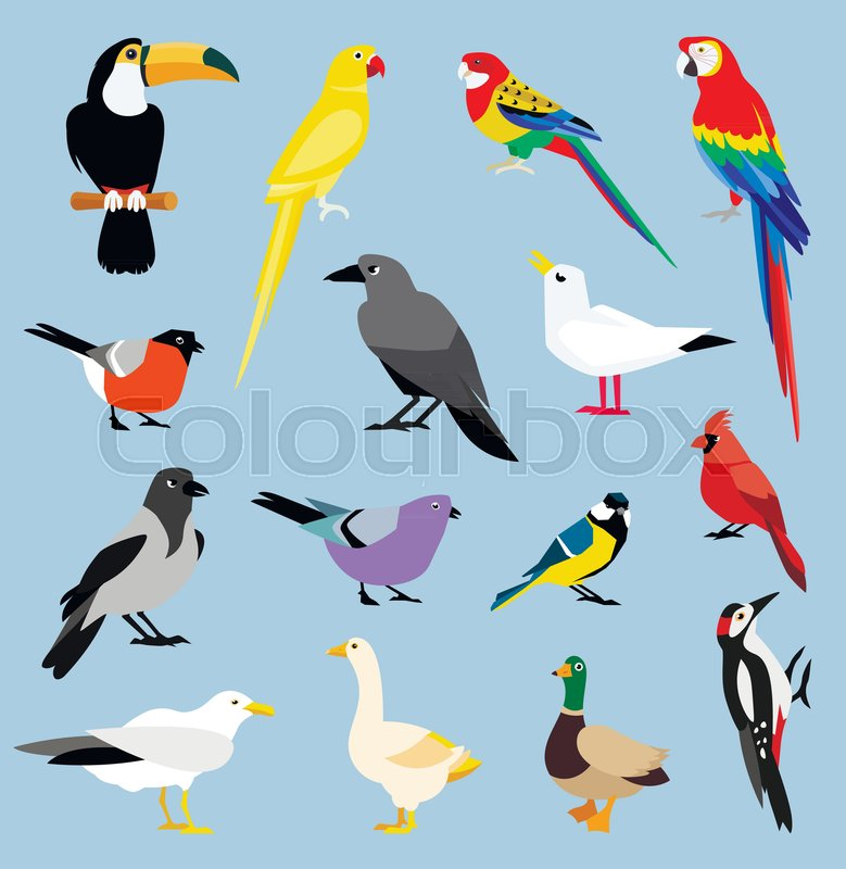 779x800 Vector Bird Icon Collection. Tropical Birds Collection Parrots And