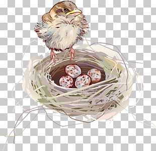310x300 596 Nest Vector Png Cliparts For Free Download Uihere