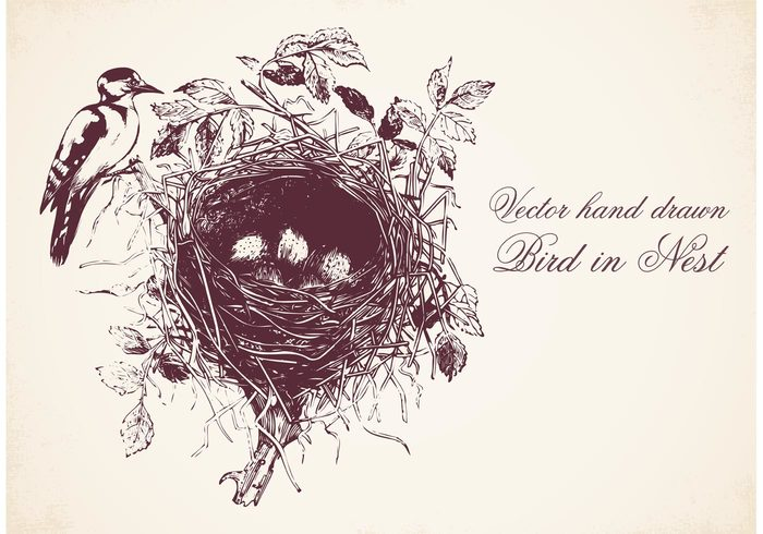 700x490 Free Hand Drawn Bird In Nest Vector 137435