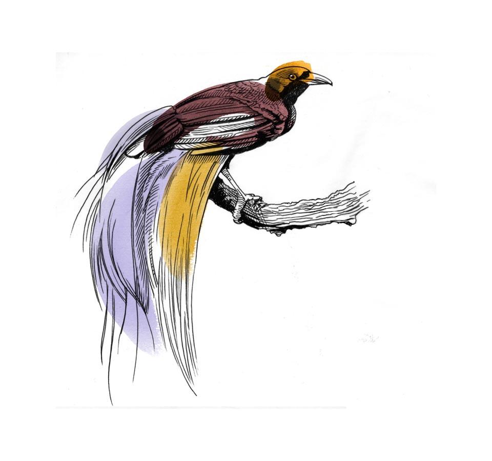 960x899 Bird Of Paradise By Jon Rogers Phosphor Art
