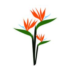 236x236 Bird Of Paradise Vector 1544132