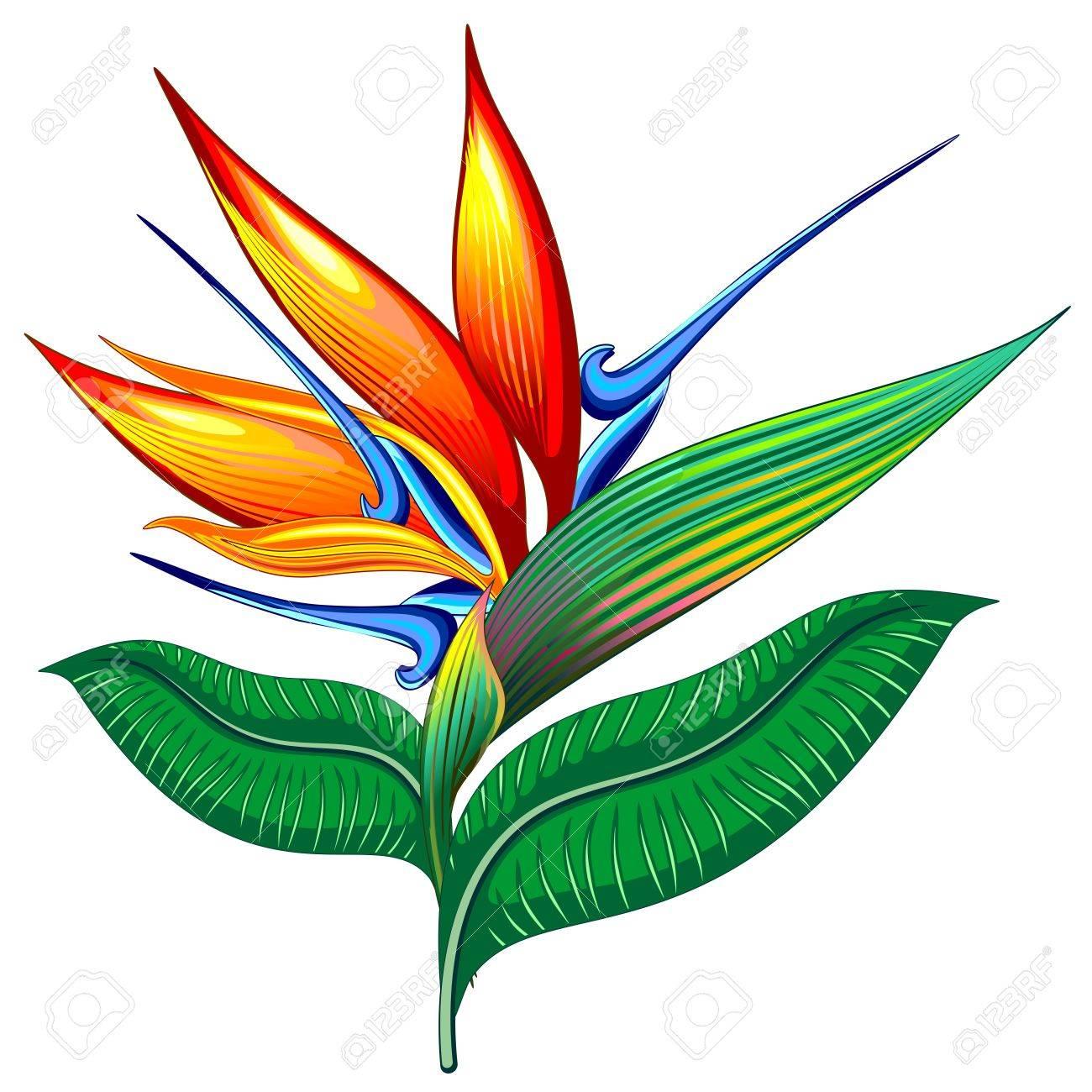 1300x1300 Bird Of Paradise Flower Exotic Botanical Vector Illustration