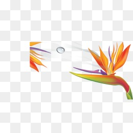 260x260 Bird Of Paradise Png, Vectors, Psd, And Clipart For Free Download
