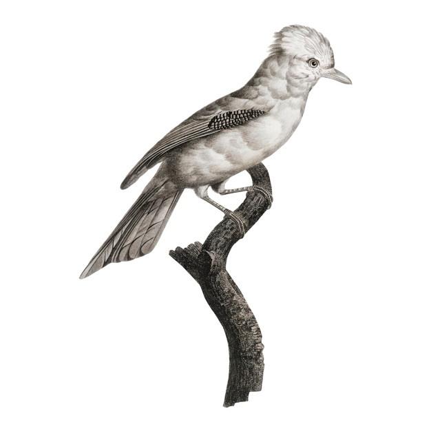 626x626 Bird Of Paradise Vectors, Photos And Psd Files Free Download