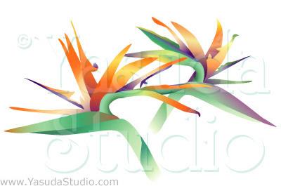 400x265 Bird Of Paradise Downloadable Vector Art Yasuda Studio