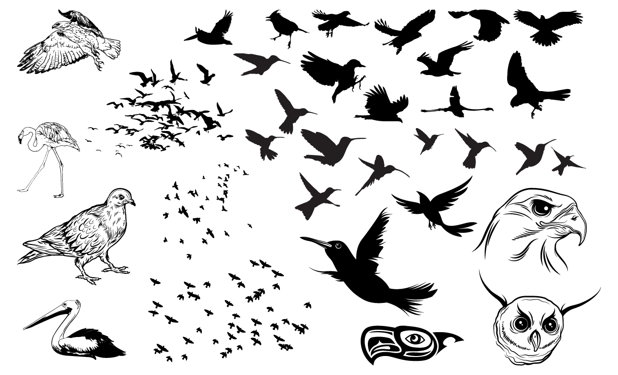 1270x770 Birds Vector Pack For Adobe Illustrator