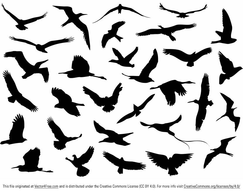 829x654 Free Bird Vector Graphics