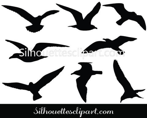 480x384 Seagulls Flying Vector Graphics Download Bird Vector Silhouettes