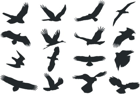 545x368 Bird Free Vector Download (2,737 Free Vector) For Commercial Use