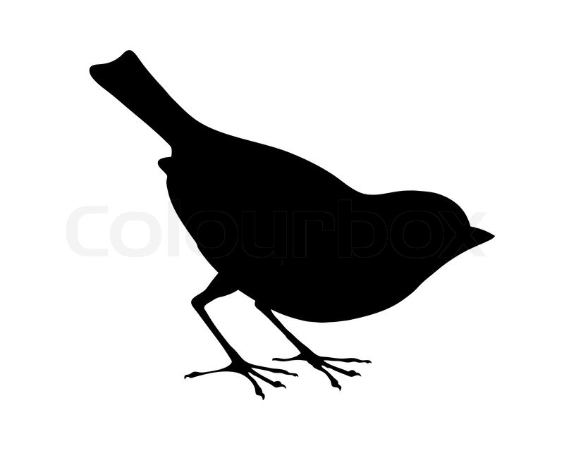 800x653 Bird Silhouette On White Background, Vector Illustration Stock