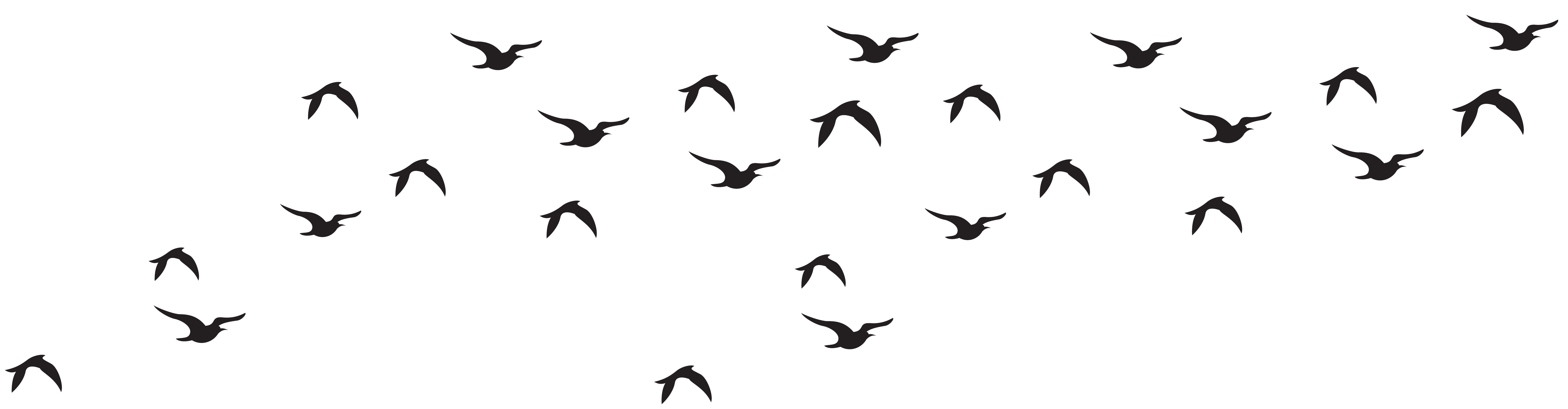 8000x2087 Collection Of Free Birds Vector Background. Download On Ubisafe