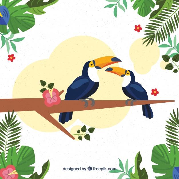 626x626 Tropical Birds Vectors Free Vector Graphics Everypixel