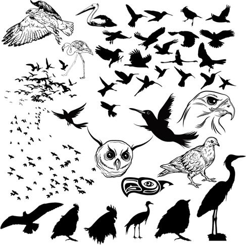 487x485 Vector Birds Silhouettes Bird, Bird