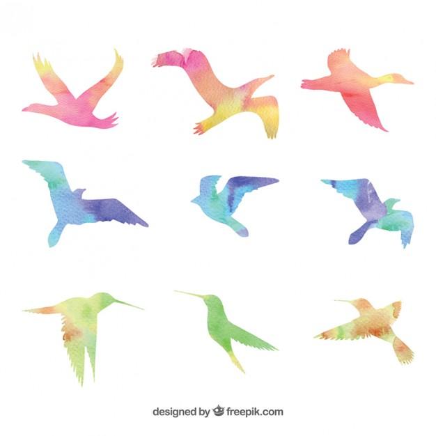 626x626 Watercolor Birds Vector Free Download