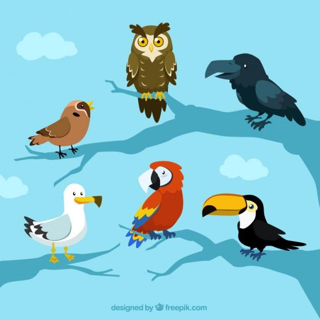 626x626 Cartoon Cute Bird Vector Material Vector Free Vector Download In