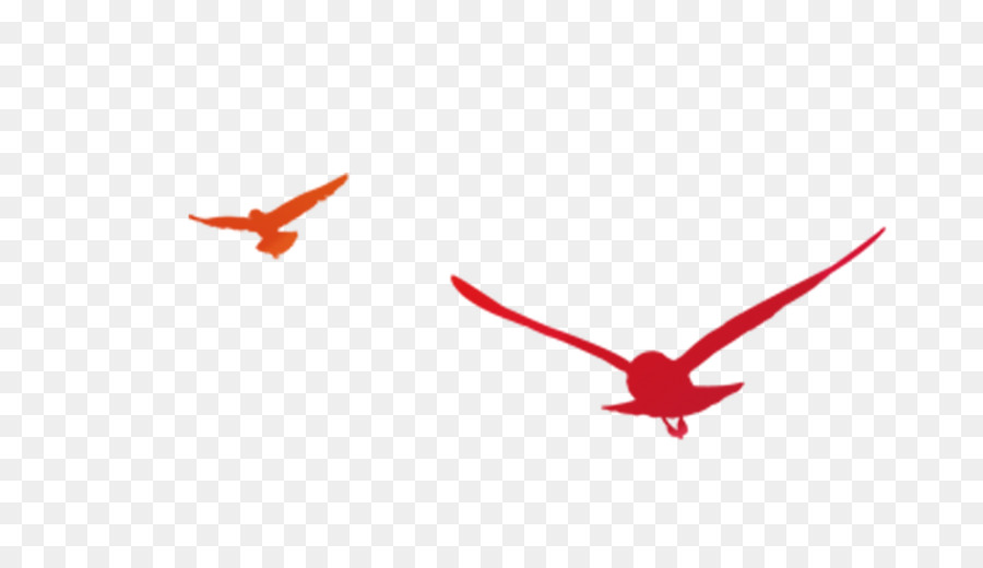 900x520 19th National Congress Of The Communist Party Of China Flight Bird