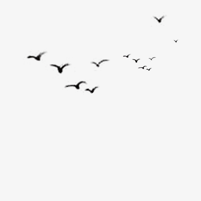650x650 Bird, Black, Bird Vector Png And Psd File For Free Download
