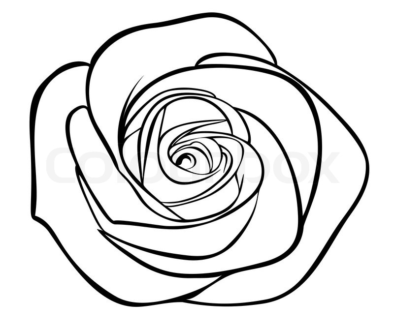 800x669 Black Silhouette Outline Rose, Isolated On White Stock Vector
