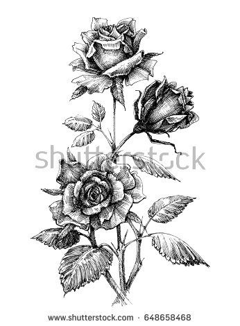 346x470 Collection Of Free Etched Clipart White Rose. Download On Ubisafe