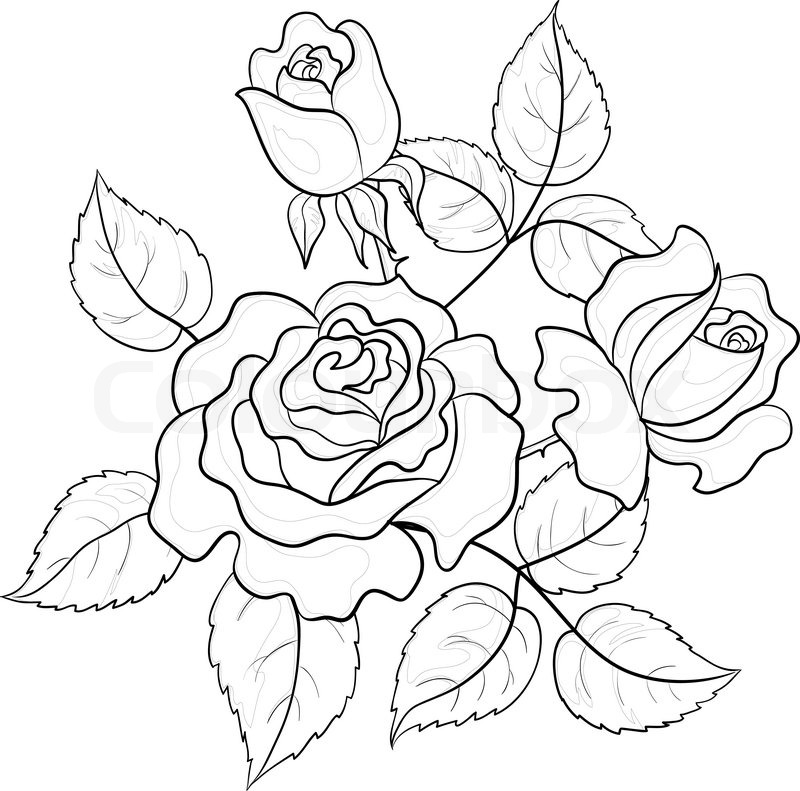 800x791 Flowers Roses, Vector, Buds And Leaves, Graphic Monochrome