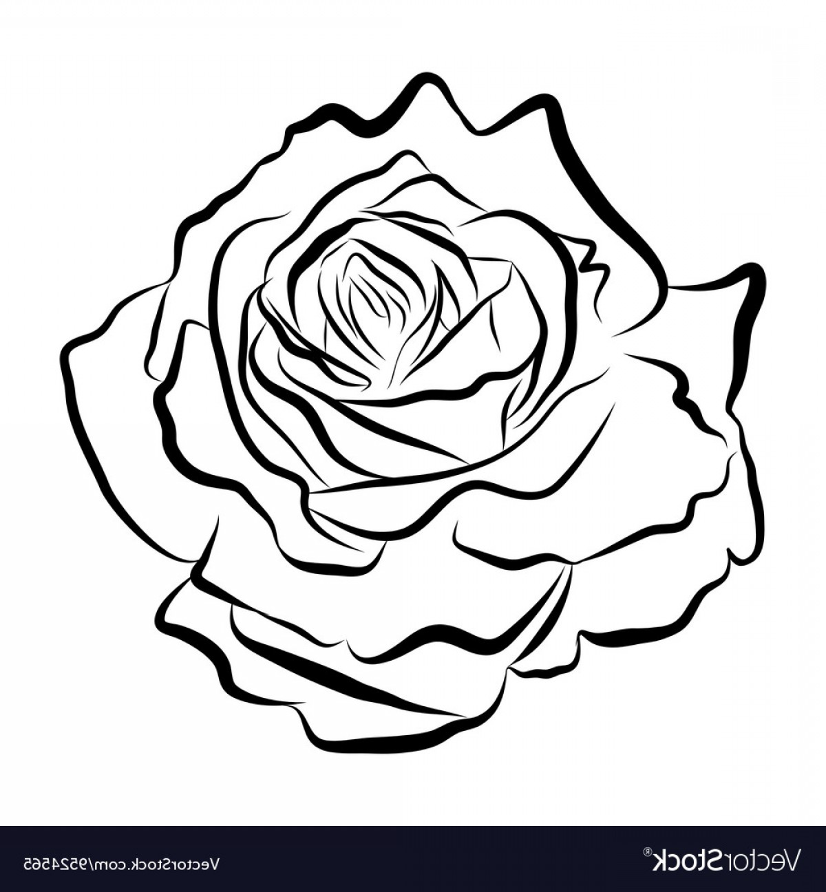 1200x1296 Rose Vector Line Arenawp