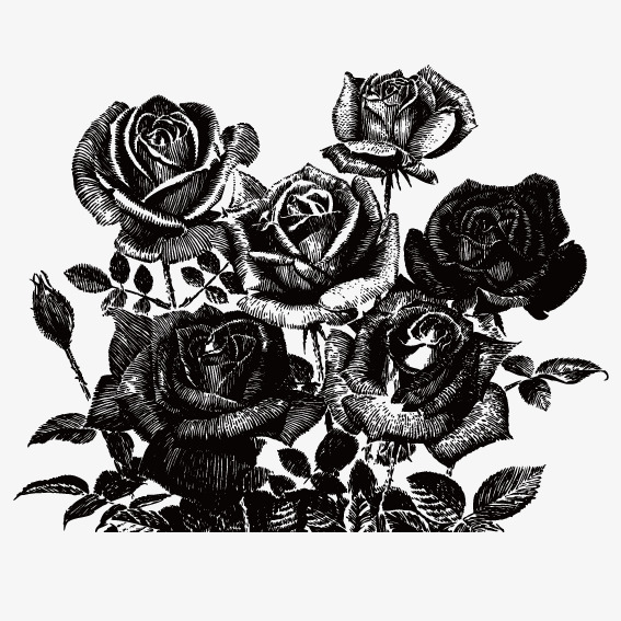 567x567 Black Rose, Vector, Black Png And Vector For Free Download