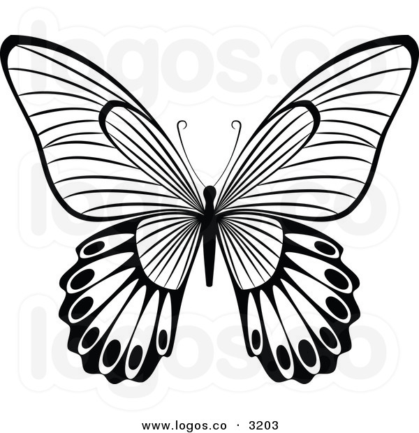 600x620 Butterfly Vector Free Royalty Free Vector Of A Black And White