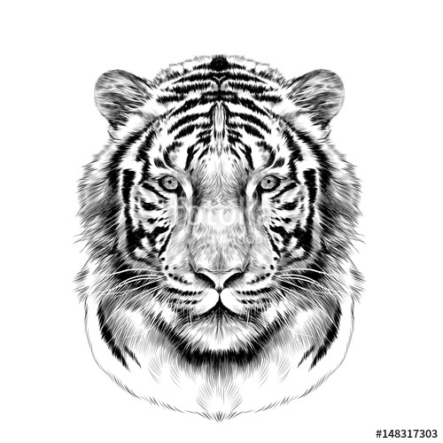 500x500 Tiger Head Full Face Symmetrical, Sketch Vector Graphics Black And