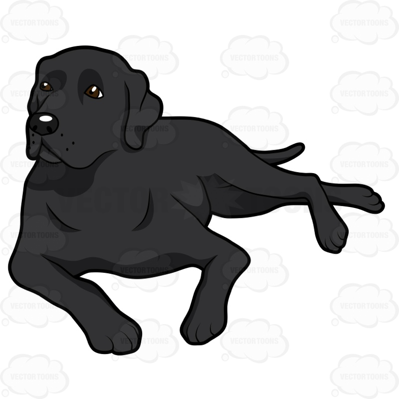 800x800 Black Labrador Lying Down On Its Side Clipart By Vector Toons