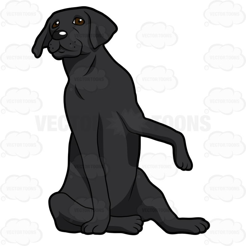 800x800 Black Labrador Sitting With One Paw Up Clipart By Vector Toons
