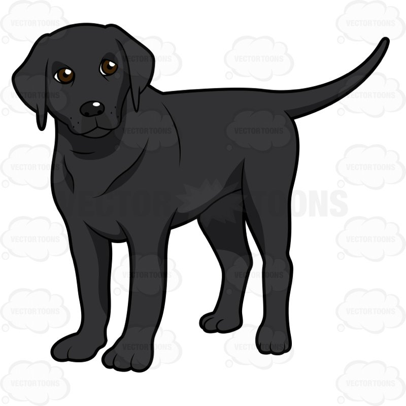 800x800 Black Labrador Standing And Looking To The Side Clipart By