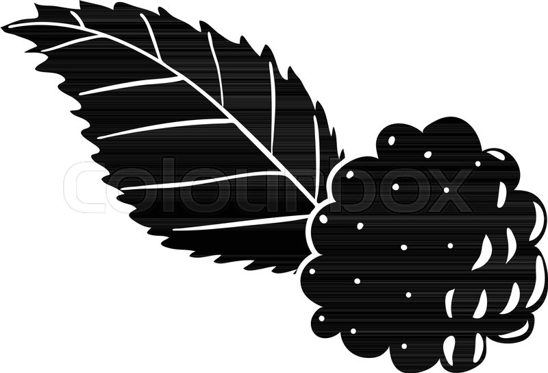 800x544 Blackberry Icon. Simple Illustration Of Blackberry Vector Icon For