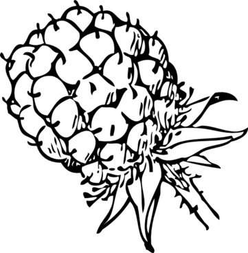 361x368 Blackberry Vector Free Vector Download (25 Free Vector) For