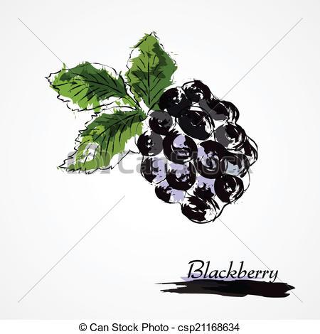 450x470 Blackberry. Hand Drawn Vector Ripe Blackberry Fruit On Light