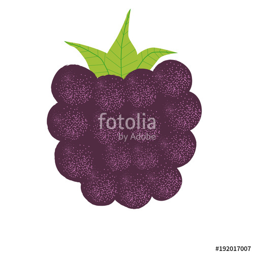 500x500 Blackberry Vector Illustration Stock Image And Royalty Free