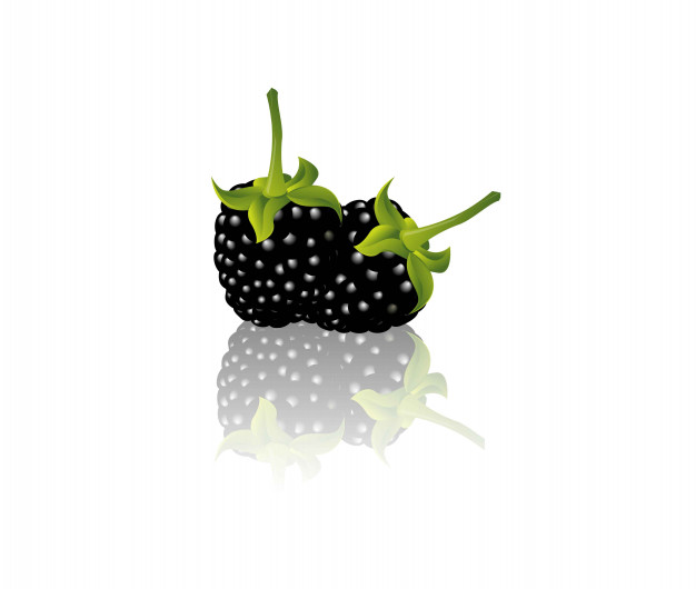 626x530 Blackberry Vector Premium Download