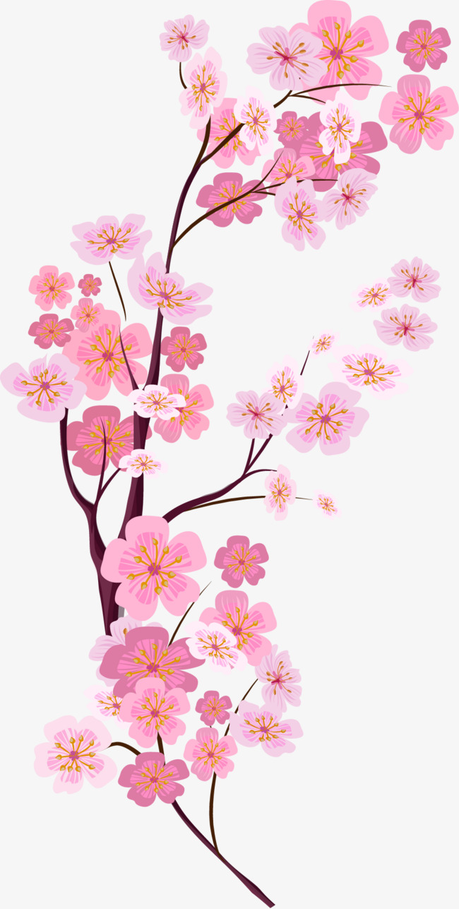 650x1287 Vector Painted Pink Cherry Blossoms, Vector, Hand Painted, Pink