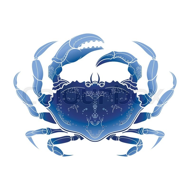 800x800 Graphic Vector Crab Drawn In Line Art Style. Sea And Ocean