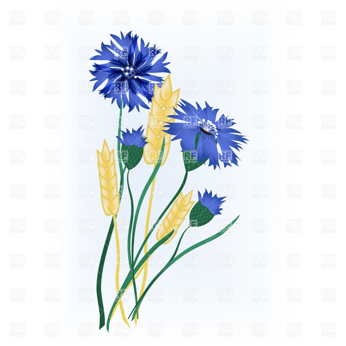 1200x1200 Wheat Ears Of Wheat And Blue Flowers Vector Image Vector Artwork