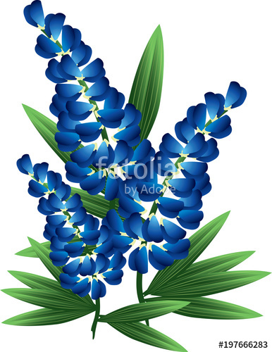 386x500 Bluebonnet Stock Image And Royalty Free Vector Files On Fotolia