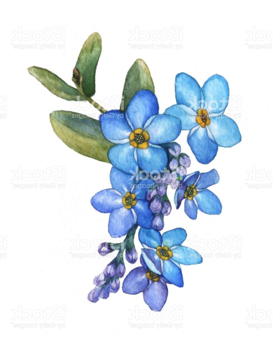 952x1228 Forget Me Not Flowers Bouquet Blue Wild Flower Watercolor Hand