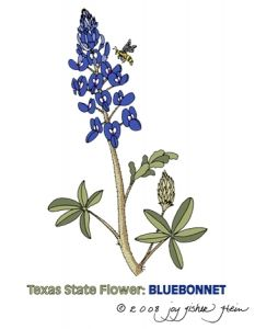 233x300 How To Draw A Bluebonnet Vector Magz Free Download Vector
