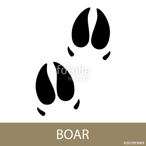 500x500 Track Of Forest Animal,trace Of A Predatory Animal Boar, Vector