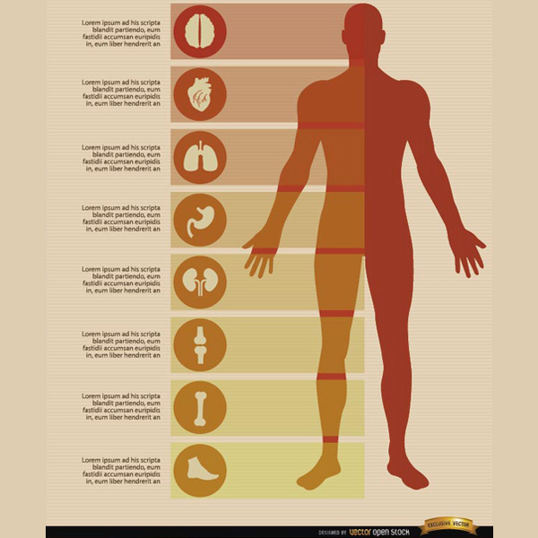 600x600 Free Male Body Infographics Vectors