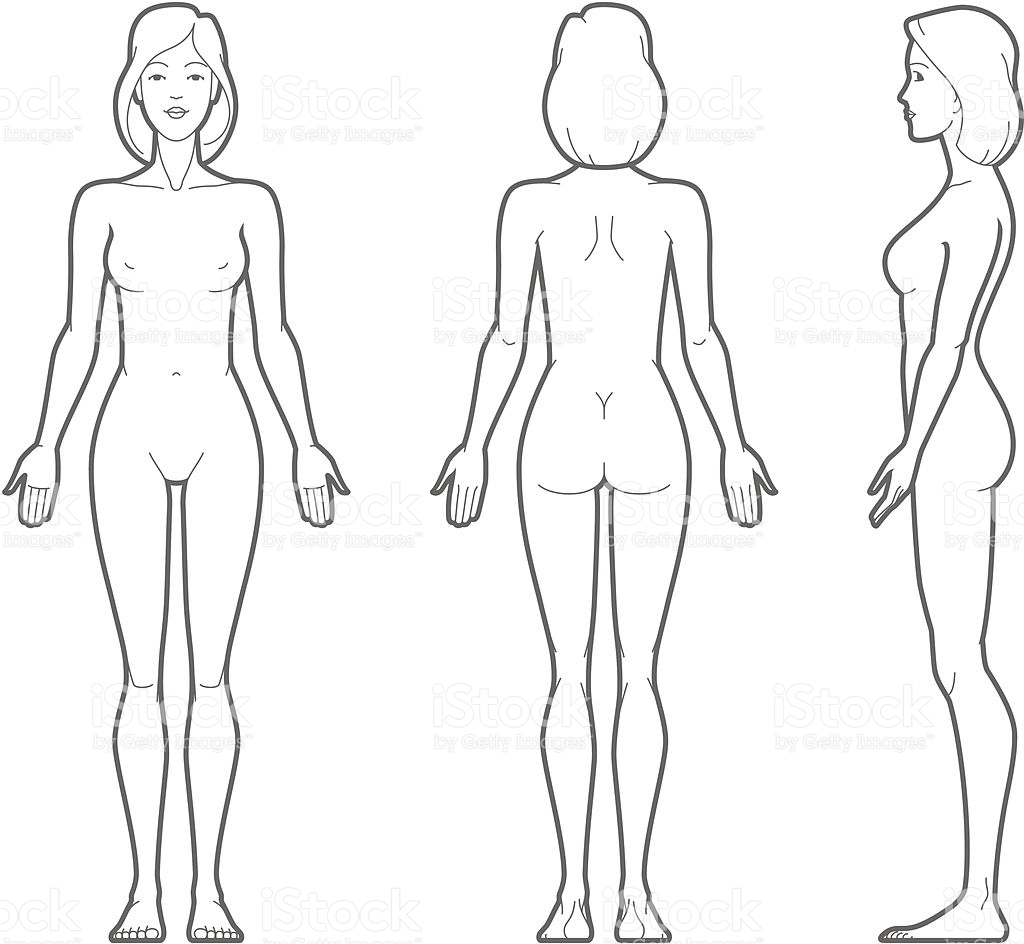 1024x944 Anatomy Of Body Vector Female Stock Art More Images 166010612