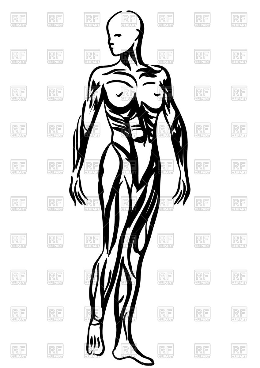 849x1200 Outlines Of Human Body