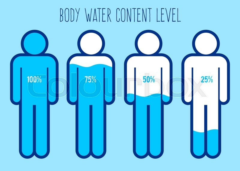800x571 Vector Stock Of Water Content Charts Percentage In Human Body