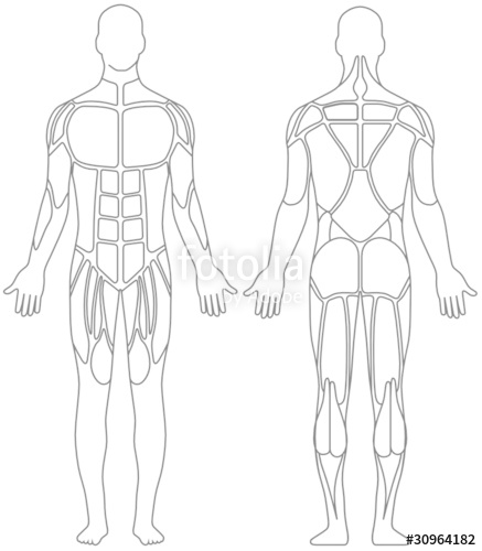 437x500 Human Body Stock Image And Royalty Free Vector Files On Fotolia
