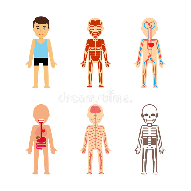 800x800 Anatomy Of Body Vector Stock Illustration Cute 64902602